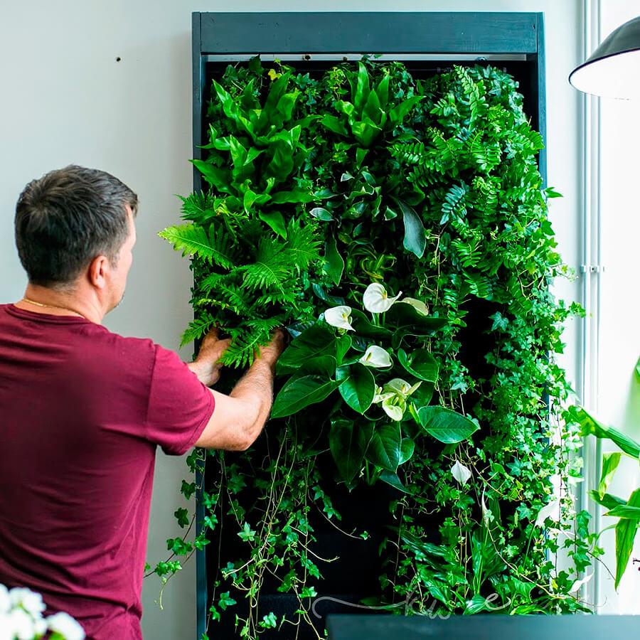 Ścianki z roślin, mchów i porostów