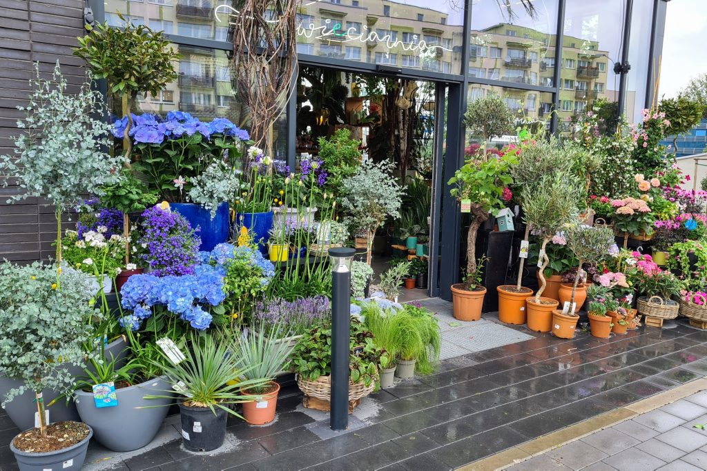 Bogaty asortyment przyciąga klientów do kwiaciarni.